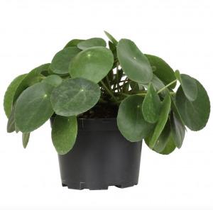walmart plants