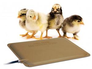 bird heating pad